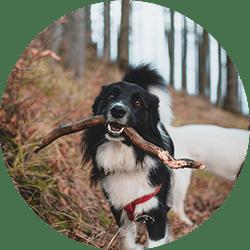 Un chien qui aime son baton
