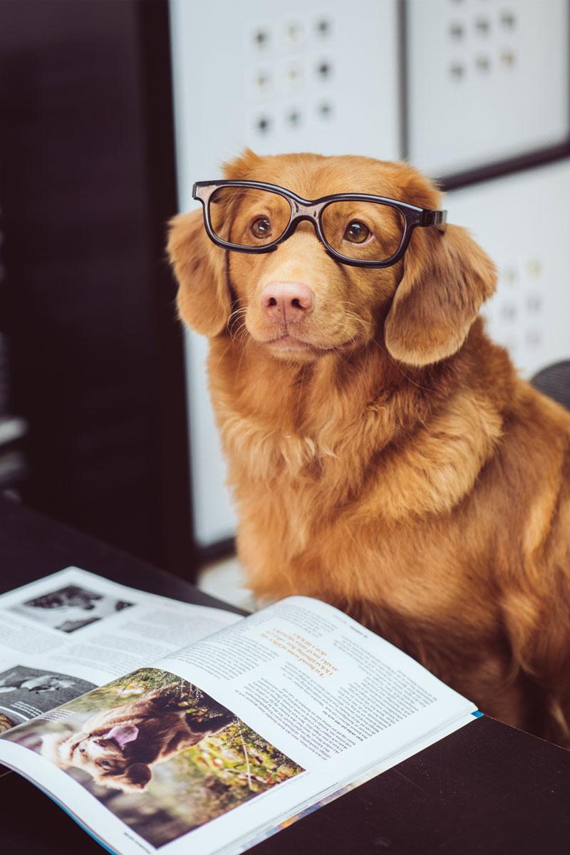 Photo de Jamie Street d'un chien studieux