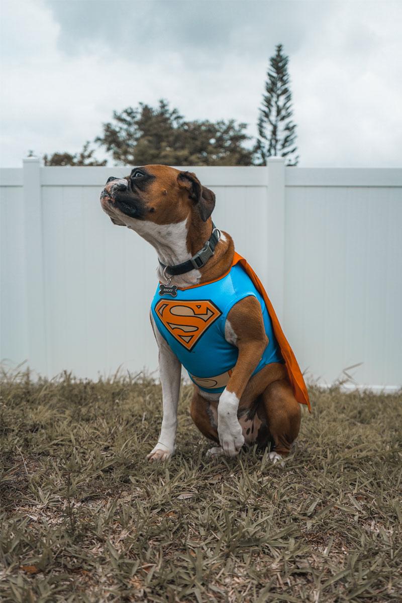 Photo d'Elias Castillo d'un chien héro